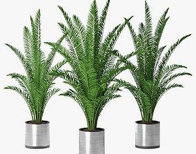 palm 08 3D model