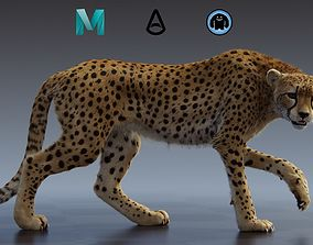 3D rigged Cheetah