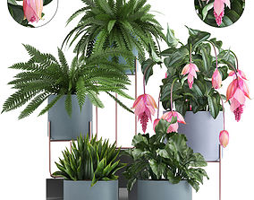 3D model Collection of Exotic plants