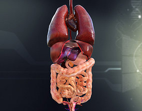 Human Female Internal Organs Anatomy 3D