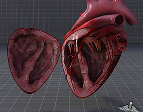 Human Heart Anatomy 1 3D