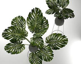 monstera plants 3D