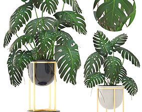 Monstera 3D plant