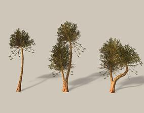 Bicton Tree 3D model