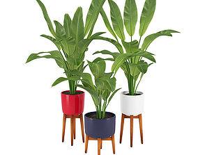 Plant 13 3D