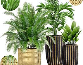 jungle 3D Collection plants