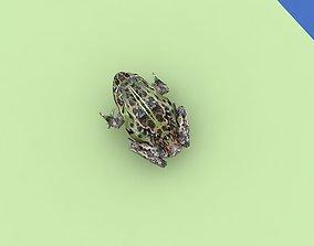 a frog 3D model