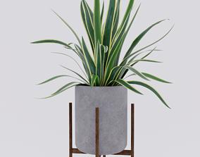 3D model Yucca home plant