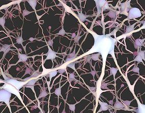 medical Neurons 3D model