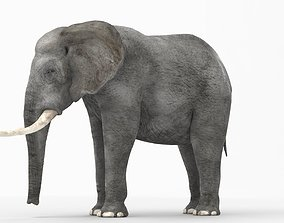 game-ready African elephant 3D model