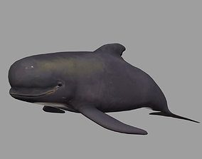Low Poly Long Finned Pilot Whale 3D Model animated 3