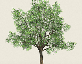 3D model Game Ready Forest Tree 06