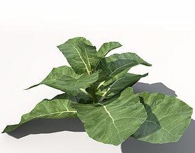 XfrogPlants Cauliflower 3D