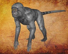 Animal - Monkey 3D model