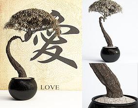 bonsai model