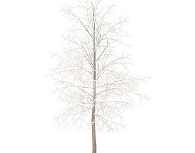 3D Sugar Maple with Snow 4point2m