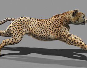 3D asset Cheetah with realistic fur