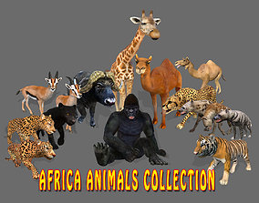 3D asset Big Collection Africa Animals - Animated model