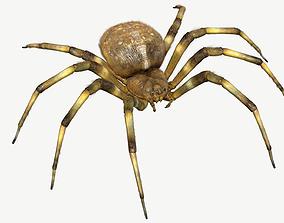 3D Orb Weaver Spider monster