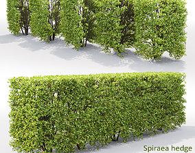 3D Spiraea hedge 03