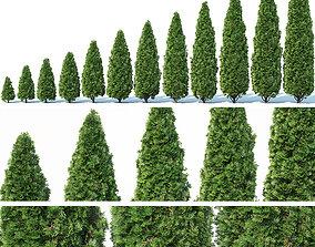 3D model Thuya occidentalis Nr1 Smaragd 12 sizes