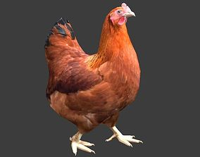 3D asset Animated Hens Chicken lowpoly