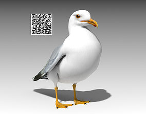 Seagull 3D asset animated realtime