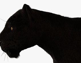 Black Leopard 3D