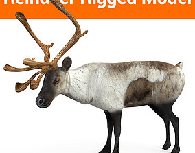 Snow Reindeer Rigged 3D model