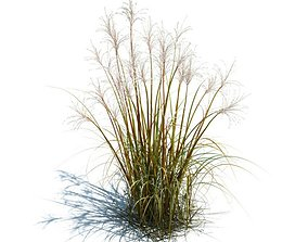 3D model Tall Grass For Landscape