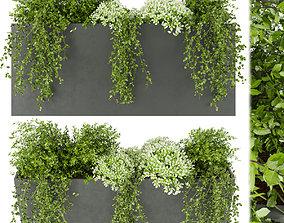 3D Collection plant vol 48