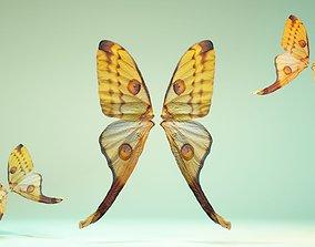 Butterfly 16 3D asset