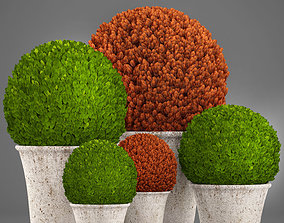 Topiary bush Buxus 3D