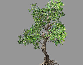3D Hundred Forests-Plants-Elm 03