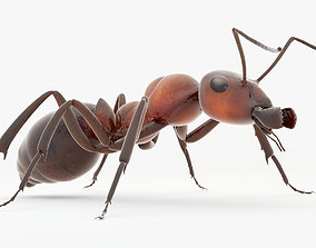 animated Animated Ant 3D model