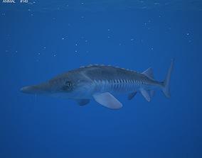 3D asset Atlantic Sturgeon Acipenser Oxyrhynchus