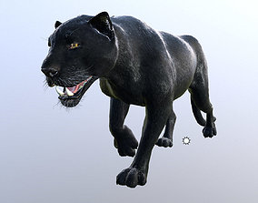 Panther -Lowpoly Animation 3D asset