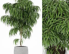 3D model Plants collection 154