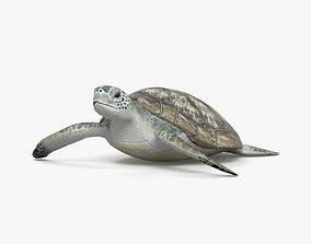 3D Hawksbill Sea Turtle HD