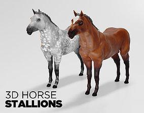 Male stallion horses 3D
