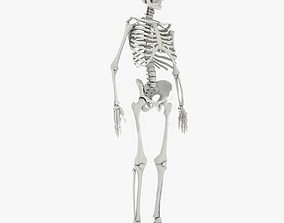 Human Skeleton 3D model realtime