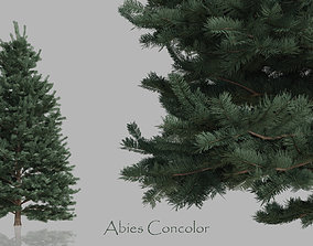Conifer Trees Pack 3D