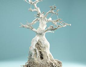 3D model RAW SCAN Dead Bonsai Tree High Poly 07