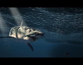 jaws shark 3D model