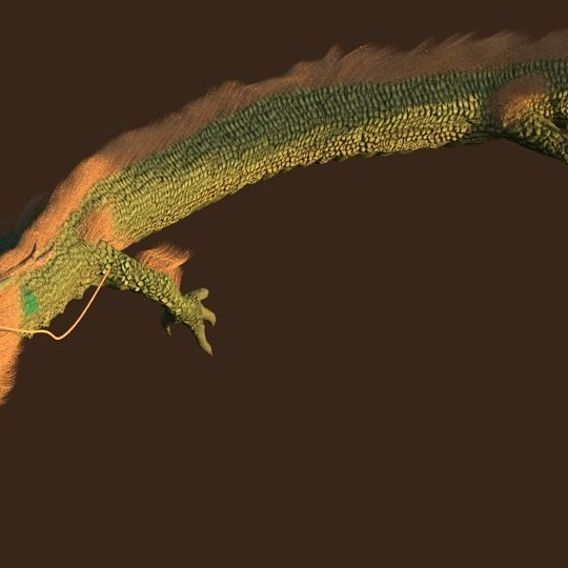 Four Claws Dragon