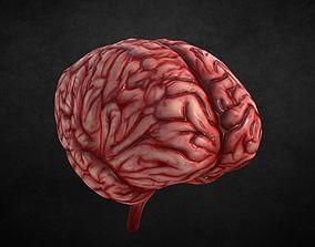 3D asset VR / AR ready Human Brain