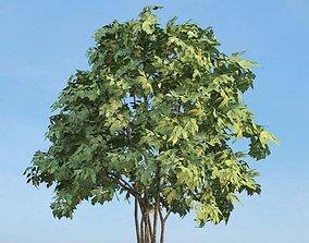 Leafy Green Tree 3D model