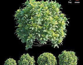 Croton plant set 11 3D model