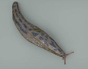Great Slug 3D model