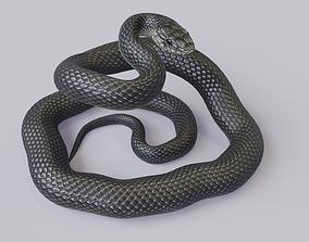 Black Mamba Rigged 3D model